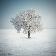 I would snow shoe to this tree and take a break with some home made hot chocolate before continuing on to.....where?