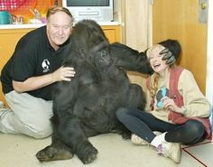 penny and koko the gorilla | Co-founders Ron Cohn and Penny Patterson in a playful moment with Koko ...