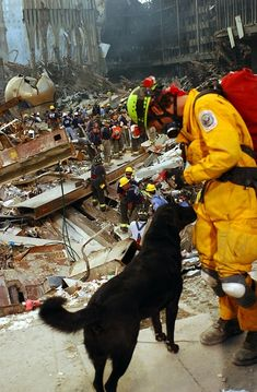 Amazing intelligence & unconditional loyalty: Labrador Retrievers, Golden Retrievers, German Shepherds, Collies, Rottweilers & scores of mutts provide the backbone of the search-and-rescue (SAR) operations at the World Trade Center wreckage. World Trade Center, Golden Retrievers, Labrador Retrievers, Collie, Pit Bull, 11 September 2001, 911 Never Forget, Tower Falling, Brave