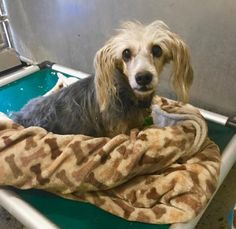 A senior dog, surrendered by his owner to California's Redlands Animal Shelter, is on limited time – in fact, he has only until Monday to be pulled to safety. On September 26, the volunteer-run Facebook page designed to help homeless pets at the shelter find homes, wrote: Update: Buddy is on limited time. We have …