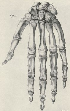 Jules Cloquet (https://pinterest.com/pin/287386019948845673) ~ Anatomie de l'Homme... 1821-1832.