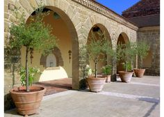 Arches and olive trees