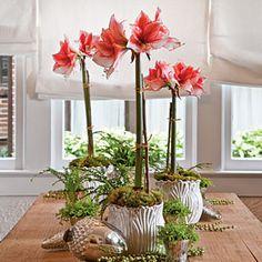 December Gardening & Planting Tips - Southern Living