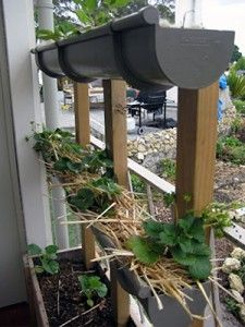 how to build the gutter garden, and what grows well in it.