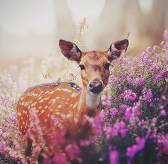 Image de flowers, animal, and deer Forest Animals, Nature Animals, Animals And Pets, Baby Animals, Cute Animals, Beautiful Creatures, Animals Beautiful, Animal Wallpaper, Woodland Creatures