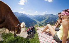 (c) Johannes Sautner, 2016 #sautner #johannessautner #tirol #kuh #landschaft #berge #alpen #alpinstyle #natur #zillertal #alps #austria tux #finkenberg #hintertux