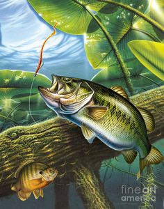 Fish Painting - Bass and Pads by JQ Licensing Sea Fishing, Fishing Bait, Gone Fishing, Fishing Knots, Fishing Rod, Bikini Fishing, Saltwater Fishing, Fishing Reels, Bass Fishing Pictures
