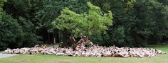 Hundreds of naked volunteers pose for American photographer Spencer Tunick on August 6, 2006 at Hofgarten Park in Duesseldorf, Germany.