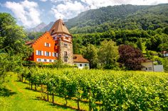 25 Best Things to Do in Liechtenstein - The Crazy Tourist Alpine Forest, Country Information, Stuff To Do, Things To Do, Beautiful Places In The World, Beautiful Scenery, Continental Europe, Next Holiday, Interesting History