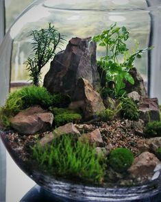 Yall should see my terrarium creation staytuned Terrarium Scene, Succulent Terrarium, Succulents Garden, Planting Flowers, Terrarium Ideas, Dish Garden, Bottle Garden, Fruit Garden, Mini Plants