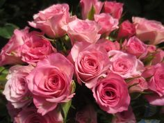 Rowena Roses For Her, Special Flowers, Spray Roses, Beautiful Roses, Wedding Events, Plants, Flora, Plant, Planets