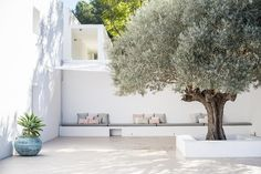 Olive tree and banquette seating in a minimalist courtyard. Design credit: Katrina Phillips Interiors #UniqueExteriors