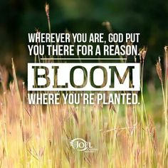 Wherever you are, God put you there for a reason. Bloom where you're planted.