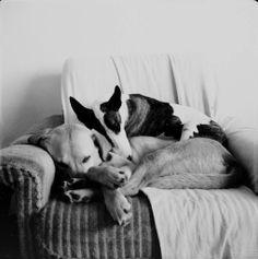 Dormindo aconhegadinhos