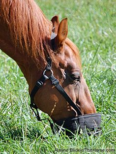 Summer Pasture and Horse Health: Tips for Safer Grazing