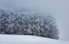 Snow Forest view@Pisoderi Ski Resort_Epirus_NW Greece_Mar2018