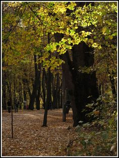 This photo from Arges, West is titled 'Fall light'. Autumn Lights, Europe, Fall, Plants, Autumn, Fall Season, Plant, Planets