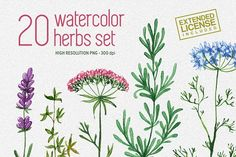 20 watercolor herbs set by Chelovector on @creativemarket