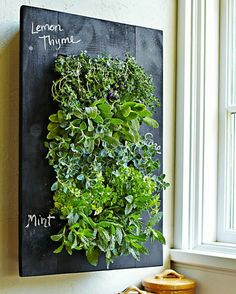 An indoor herb garden. I would love this for the kitchen