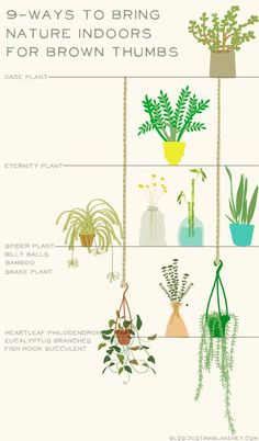 House plant information illustration