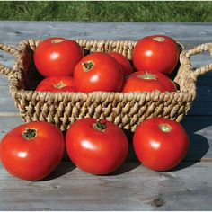 David's Garden Seeds Tomato Slicing Mountain Fresh Plus (Red) 25 Non-GMO, Hybrid Seeds