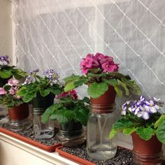 Wick watered African Violets ... You can make it look more visually appealing, but this is the method preferred by serious growers ... The plant chooses how much water it wants ... All you have to do is keep the bottom filled & walk away :) ...
