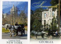 Draft Horse Postcards