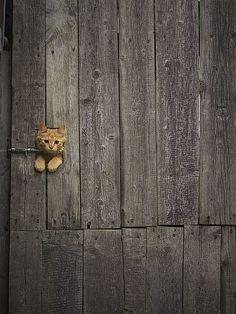 kitty door lock