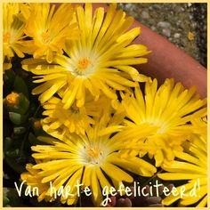 Van harte gefeliciteerd kaart gele bloemen