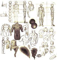 Drawing Skills, Drawing Techniques, Figure Drawing, Human Anatomy Art, Anatomy Drawing, Art Reference Poses, Drawing Reference, Animal Drawings, Cool Drawings