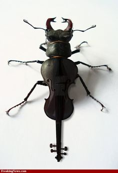 Bug Violin pictures