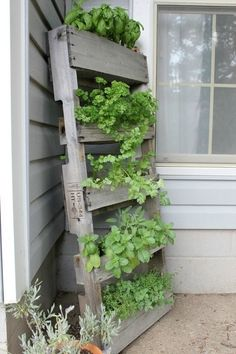 "herb garden ... reclaimed wood. Could suspend it from heavy-duty hooks and ""I"" bolts along house wall to keep dogs from eating it"