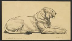 """Lionne au repos, 1907.Crayon sur papier Japon Signé et dédicacé à M.Meynial.Pencil on Japan paper. Signed and dedicated.D : 30 cm(11,8"""") x 20 cm (7,9"""")"""