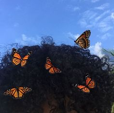 Shared by Shan ♡. Find images and videos about hair, aesthetic and butterfly on We Heart It - the app to get lost in what you love. Black Girl Aesthetic, Aesthetic Photo, Aesthetic Pictures, Aesthetic Dark, Ideas Fotos Tumblr, Laura Lee, Pics Art, Black Girl Magic, Wall Collage