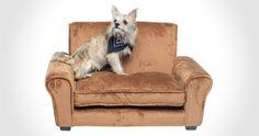 Pet Couch | Cool Sh*t You Can Buy - Find Cool Things To Buy
