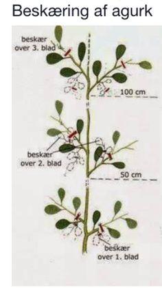 Garden Plants, Plant Leaves, Planters, Green, Fingers, Strong, Hands, Facebook, Vegetables