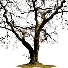 arbre,tubes,png