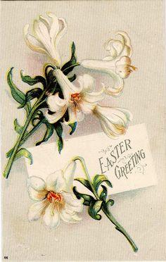 #Easter #antique #postcard #daffodil