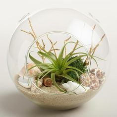 39 idee per realizzare dei fantastici terrari in vetro – MissCrafty