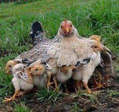 A super mãe!