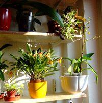 Orchideák napos ablakban