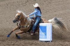 Hailey Kinsel Sweeps Calgary Stampede Pool B - Barrel Horse News Barrel Racing Saddles, Barrel Racing Horses, Barrel Horse, Barrel Racing Quotes, Western Pleasure Horses, Rodeo Life, Western Riding, Horse World, Horse Photos