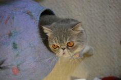 羊毛フェルトで作った柔らかい卵型の猫の巣です。|ハンドメイド、手作り、手仕事品の通販・販売・購入ならCreema。