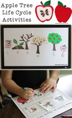 Apple Tree Life Cycle printables and other apple-themed activity ideas