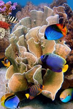 Seas & Oceans - Flora & Fauna -