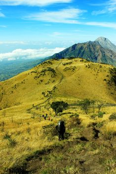 Mt. Merbabu Central Java - Indonesia