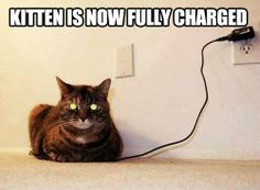Kitten is now fully charged..