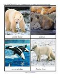 printable Arctic animals cards