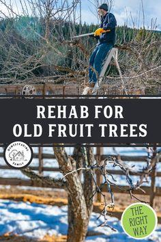 Prune Fruit, Pruning Fruit Trees, Tree Pruning, Pruning Plants, Veg Garden, Fruit Garden, Garden Trees, Edible Garden, Apple Tree Care