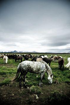 Iceland by Chris Zielecki